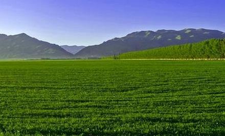 正大草业-国产甘肃苜